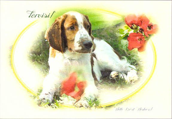 onnitluskaart_koeraga